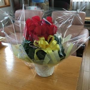 きれいなお花を頂きました